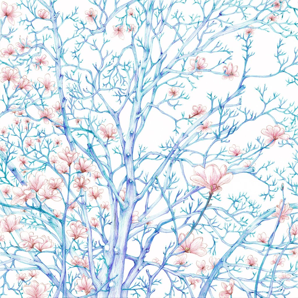 06. 青空に白木蓮の画像