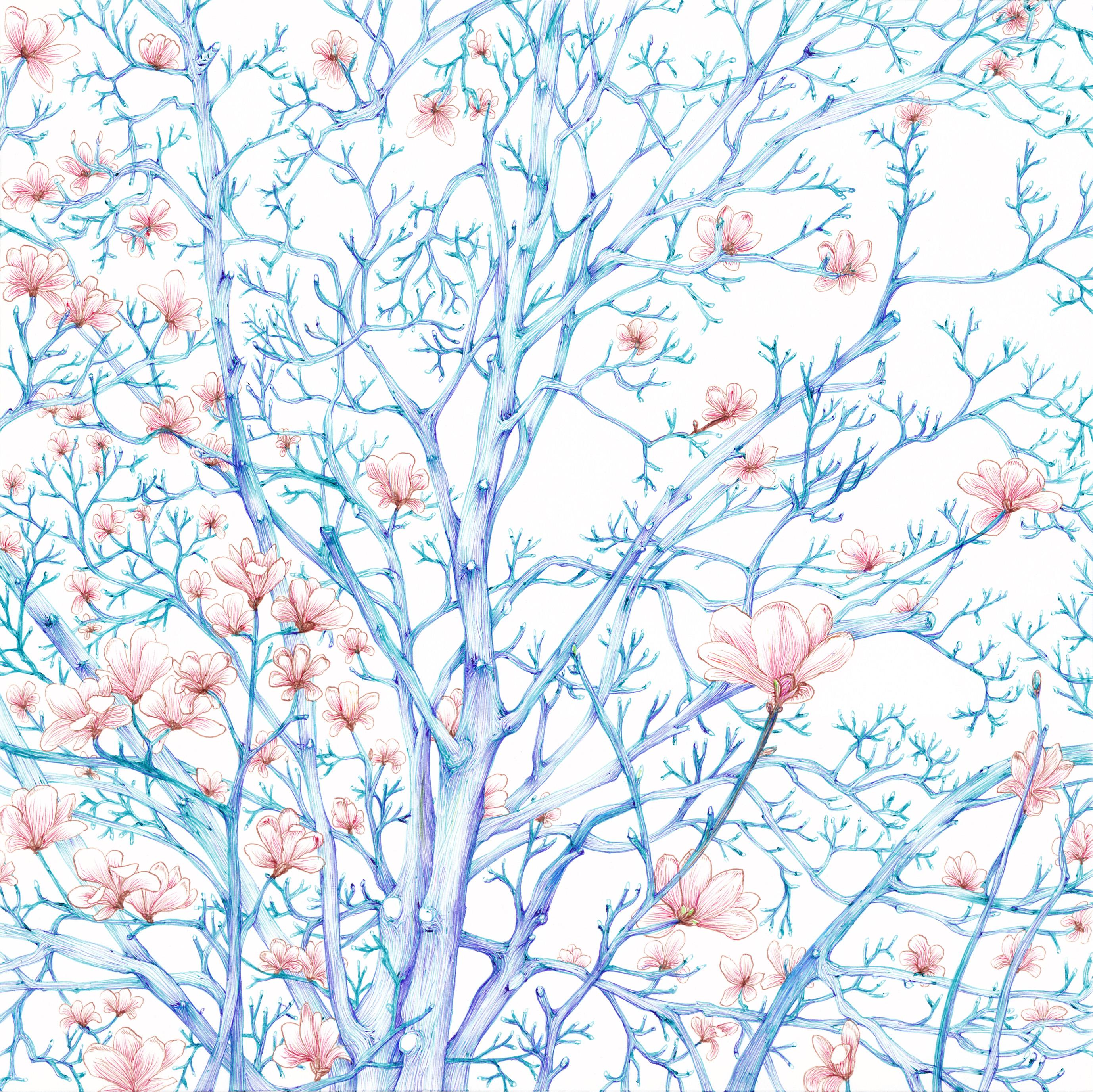 06. 青空に白木蓮画像