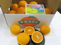 清見オレンジ画像