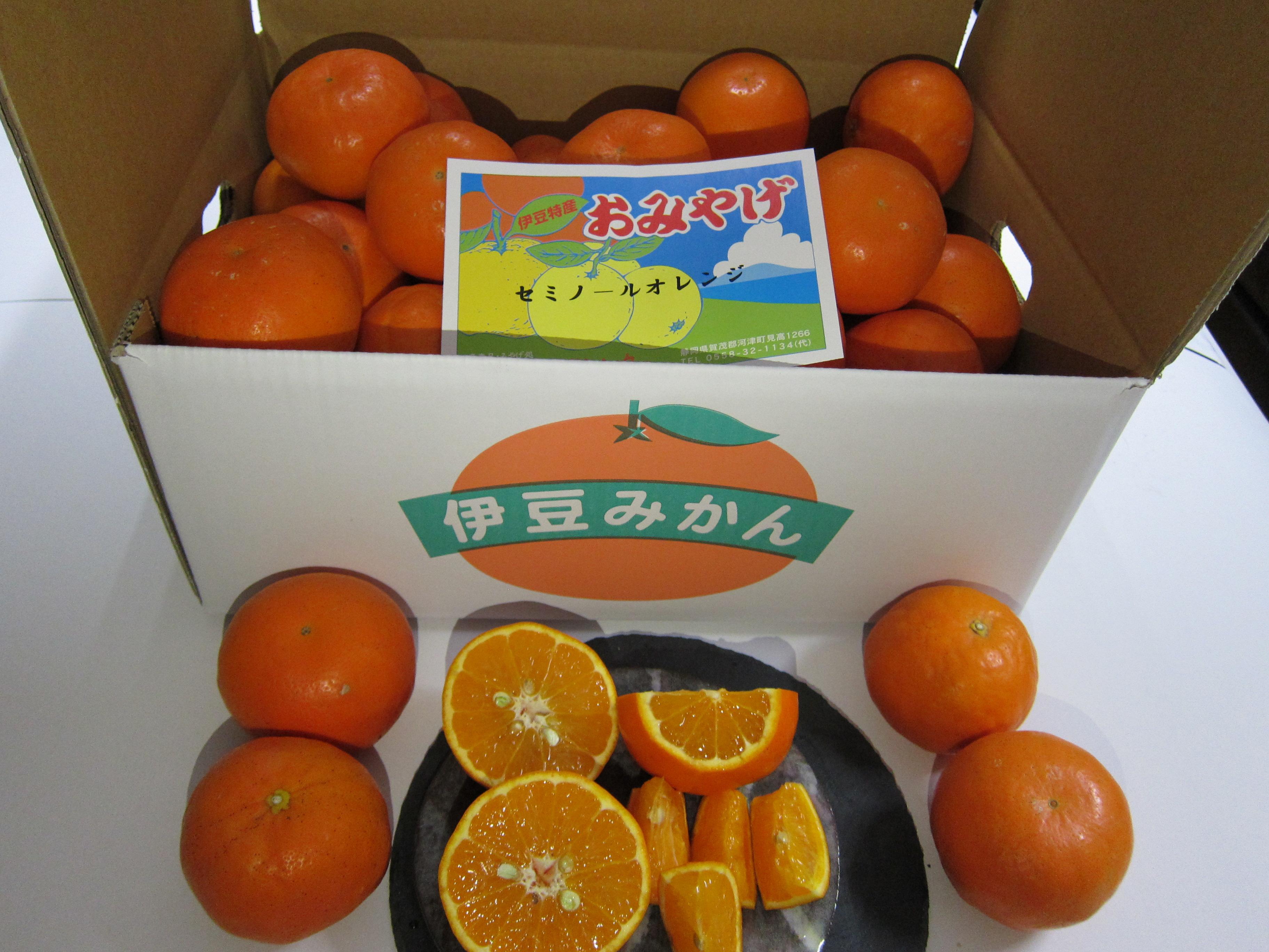 セミノールオレンジ画像