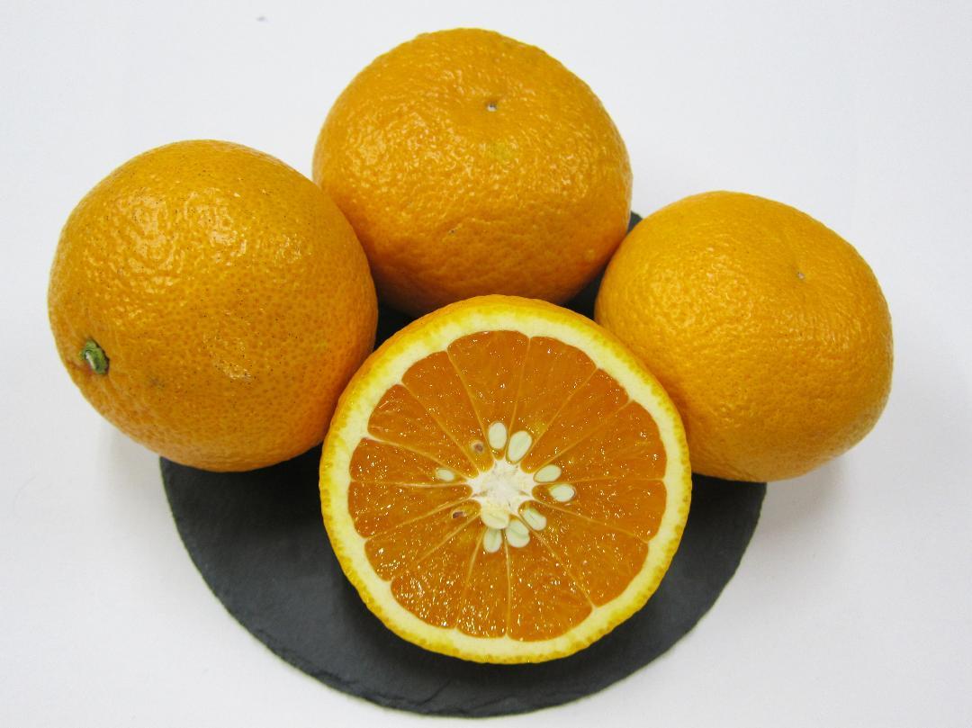 センターオレンジ画像